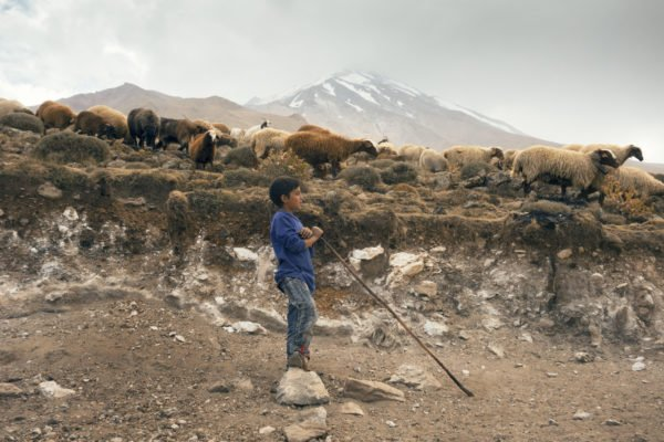 A young shepherd watches his sheep on the foothills of Mount Damavand.